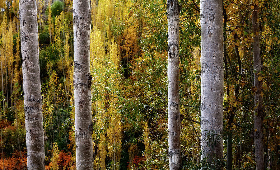 Nature Photograph - Autumn In A Jungle by Awais Yaqub