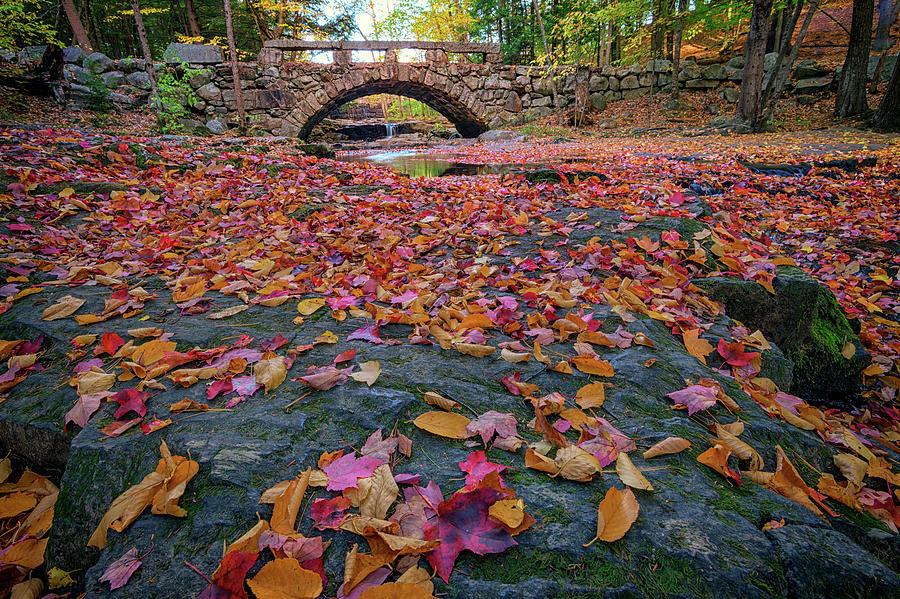 Vaughan Woods Photograph - Autumn In New England by Rick Berk