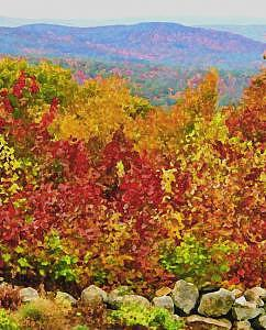 Trees Photograph - Autumn In New England by Suerae Stein