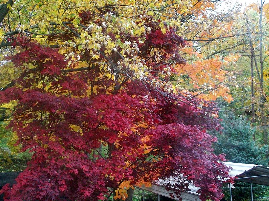 Tree Photograph - Autumn In October by Misty VanPool
