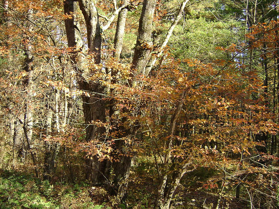 Autumn Photograph - Autumn In The Country by Paula Prindle