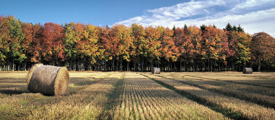 Autumn In The Fields Photograph