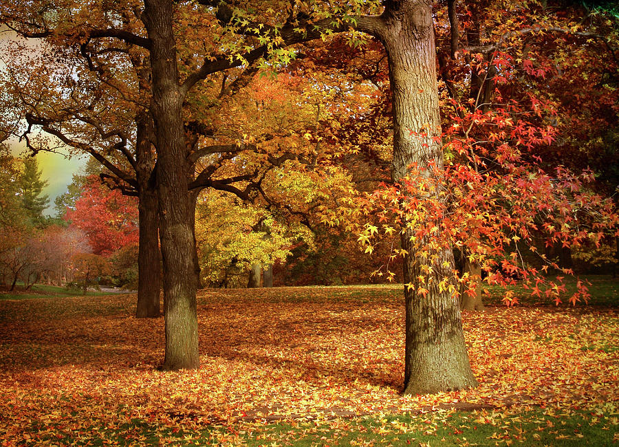 Autumn In The Orchard Photograph