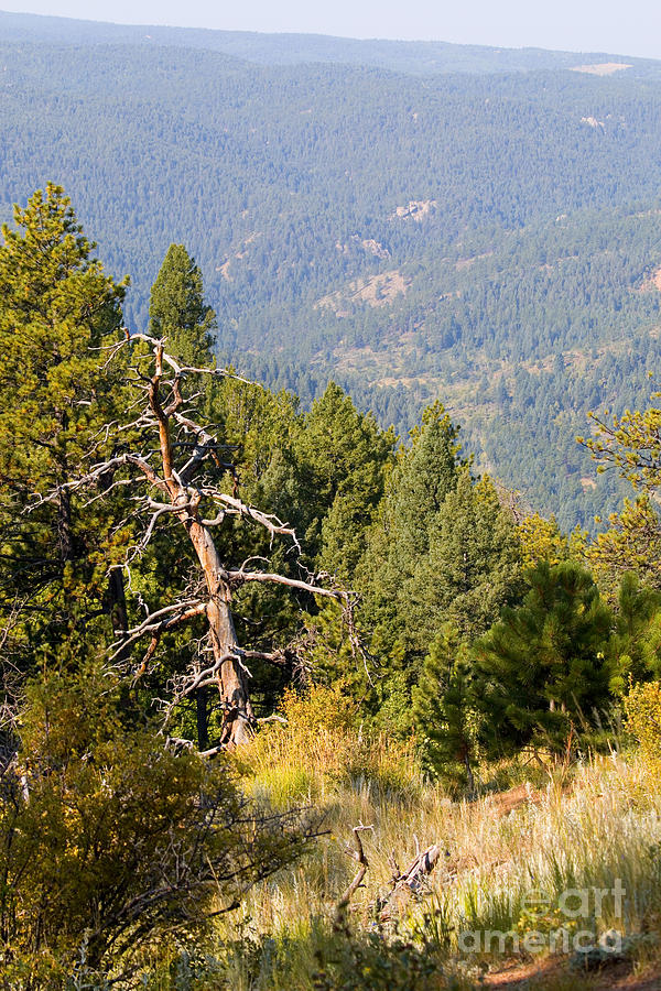 Autumn In The Pike National Forest Of Colorado Photograph