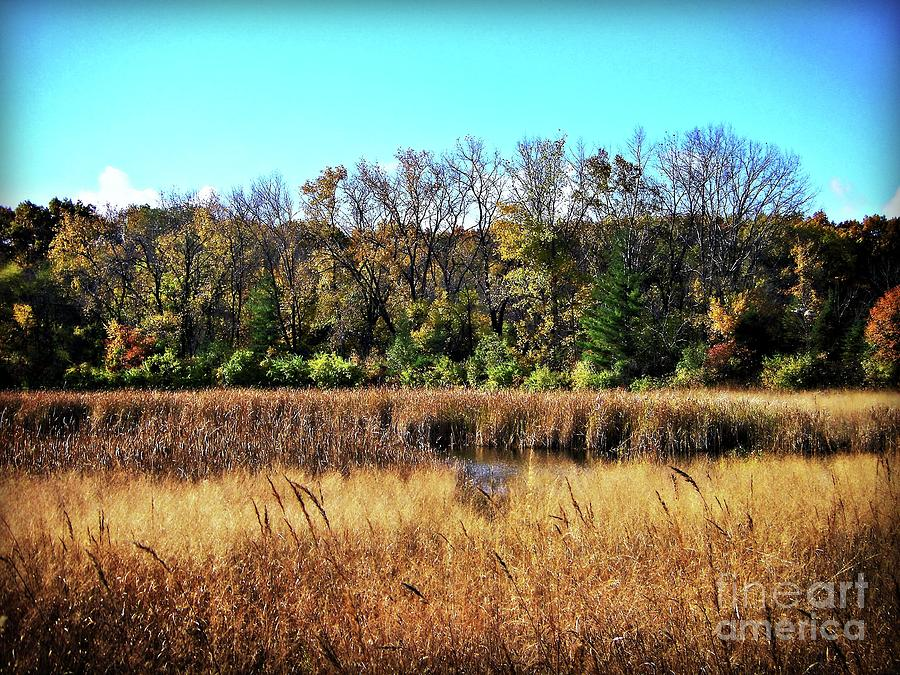 Autumn In The Wetlands Photograph
