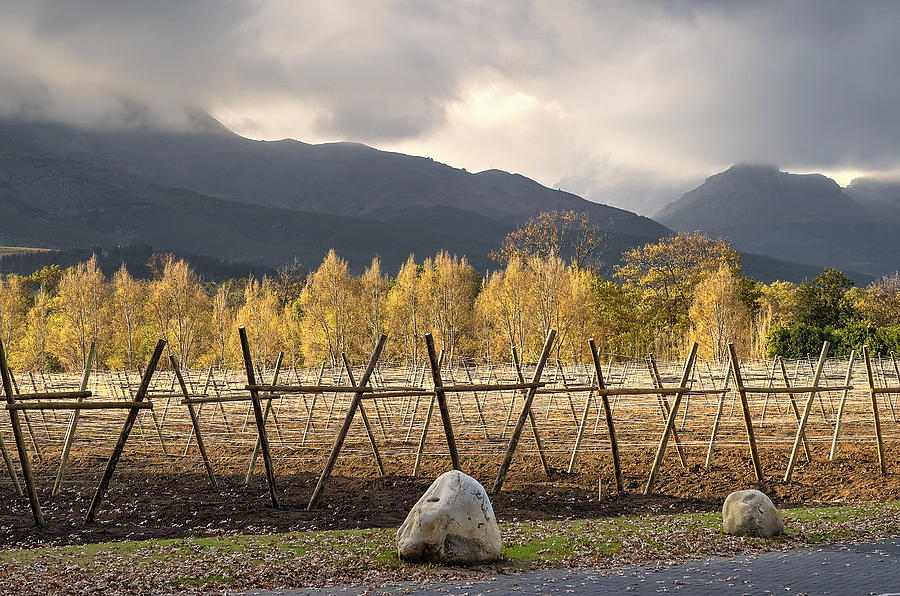 Autumn Photograph - Autumn In The Winelands by John Clemens