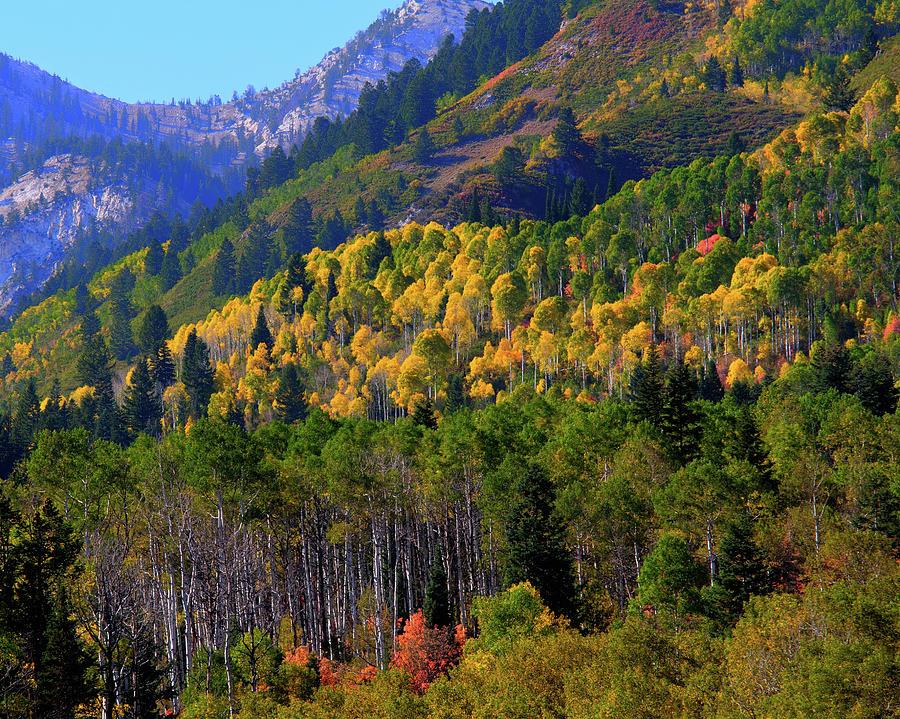 Autumn in Utah by Bryan Carter