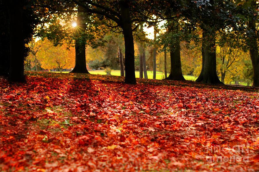 Autumn Photograph - Autumn In Woodthorpe by David Bigwood
