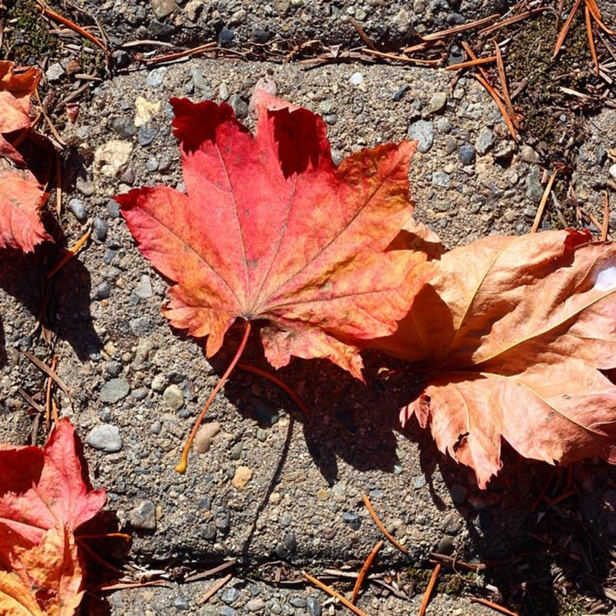 Leaves Photograph - Autumn is Here by Blenda Studio