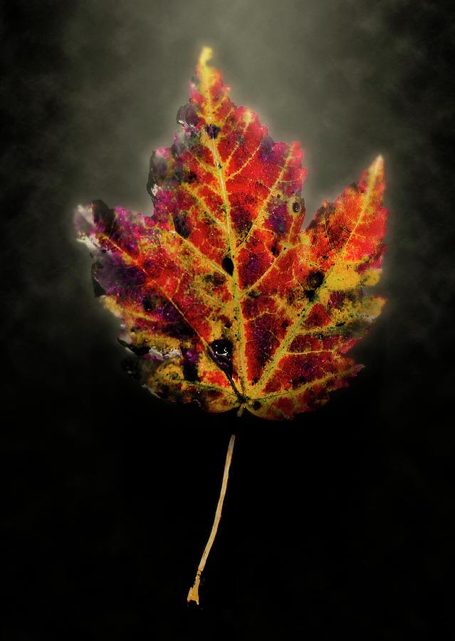 Leaf Photograph - Autumn by Jim Painter