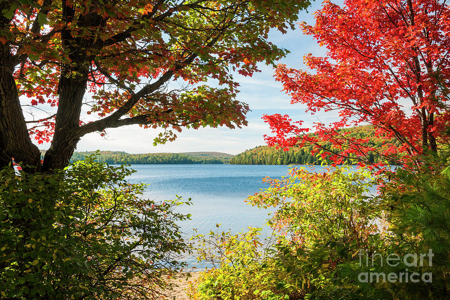 Fall Photograph - Autumn Lake by Elena Elisseeva