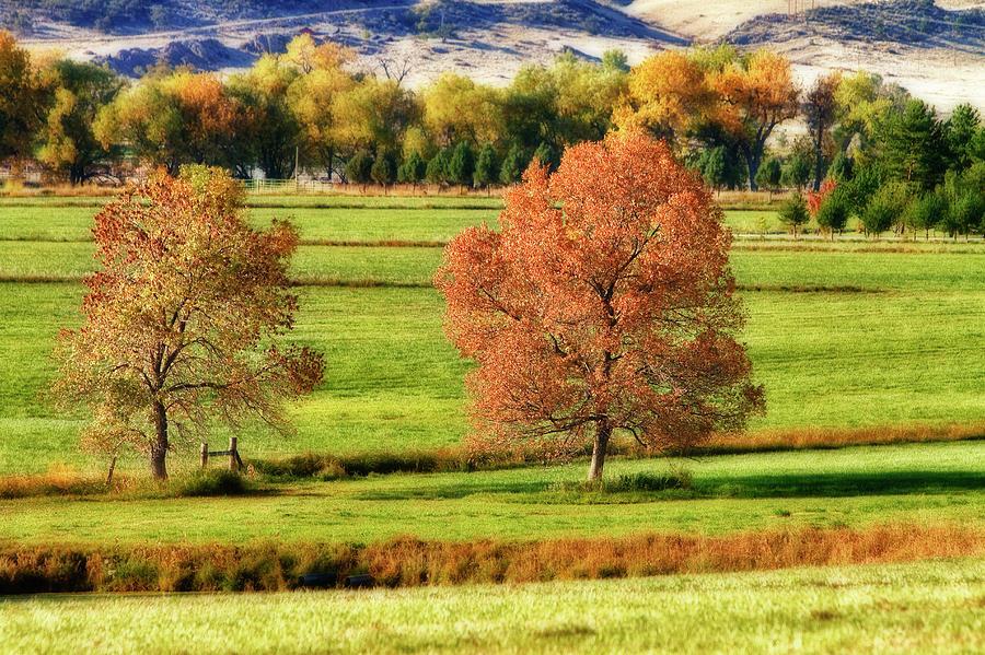 Autumn Photograph - Autumn Landscape Dream by James BO  Insogna