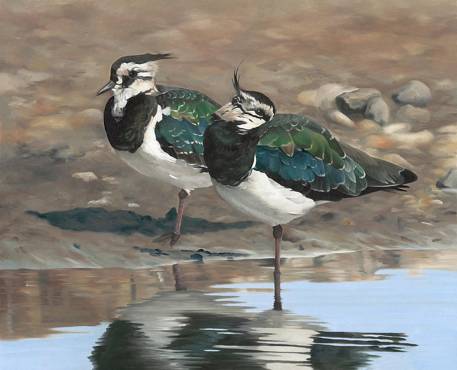 Lapwing Painting - Autumn Lapwings by Clive Meredith