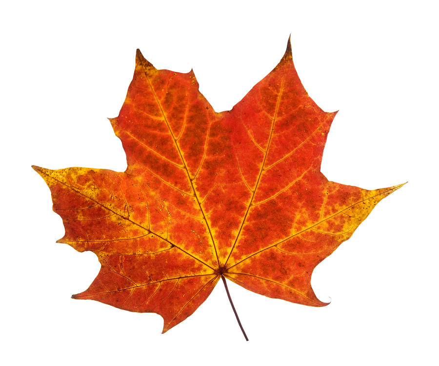 Autumn Leaf 3 Photograph by Gill Billington