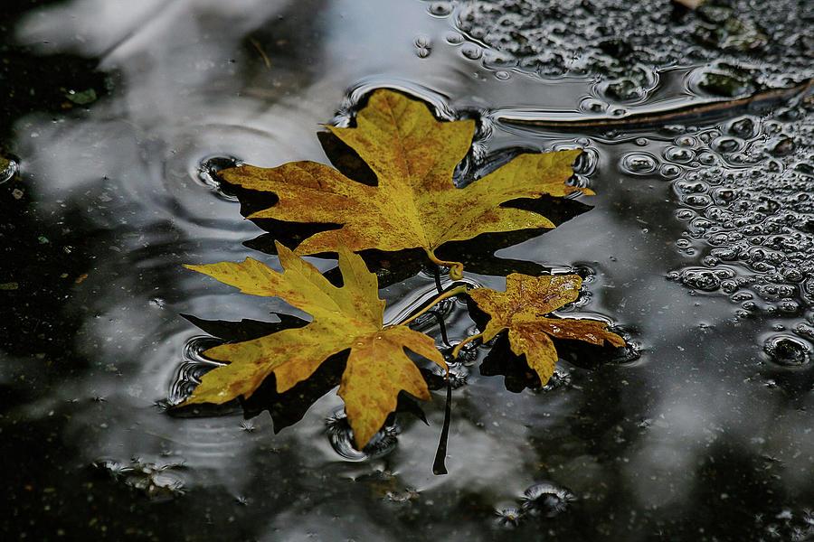 Autumn Leaf by Melodie Douglas
