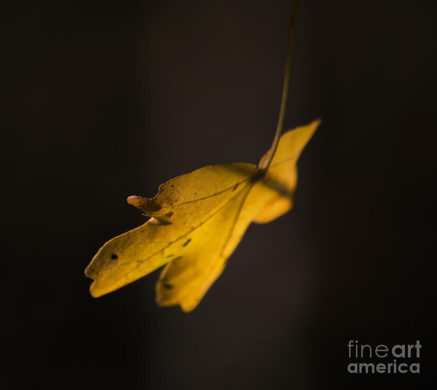 Leaf Digital Art - Autumn Leaf by Nigel Bangert