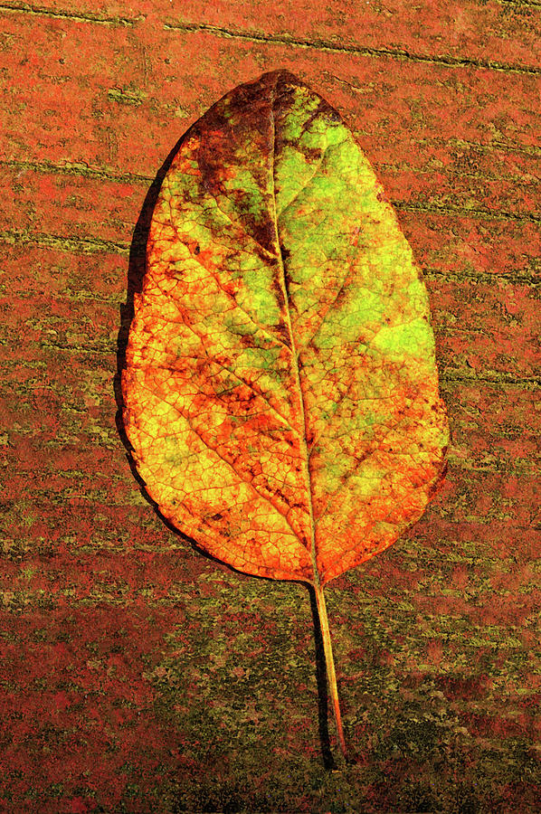 Autumn Leaf Two by Tikvah's Hope