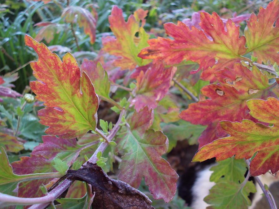 Autumn Photograph - Autumn Leafs by David Du Hempsey