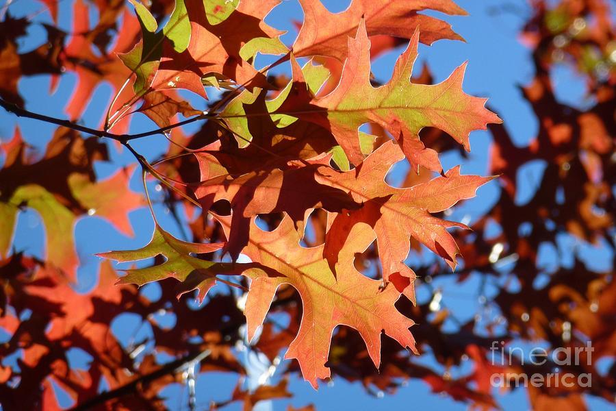 Autumn Photograph - Autumn Leaves 17 by Jean Bernard Roussilhe