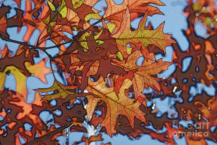 Autumn Photograph - Autumn Leaves 17 - Variation  2 by Jean Bernard Roussilhe