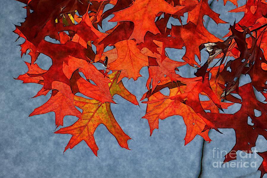 Autumn Photograph - Autumn Leaves 19 by Jean Bernard Roussilhe