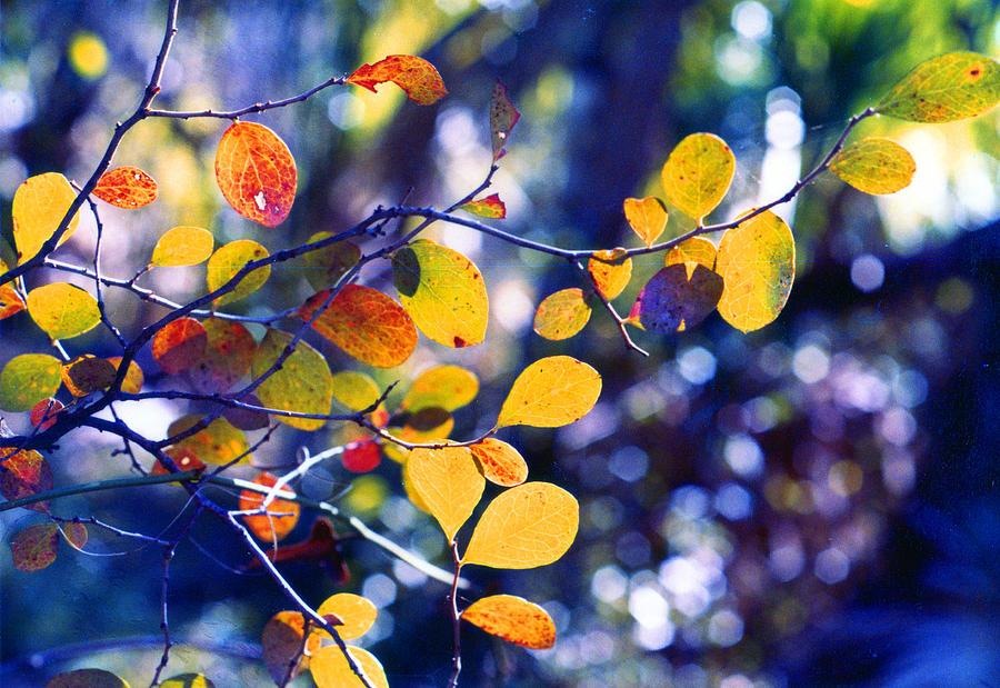 Autumn Photograph - Autumn Leaves 2 by Russ Mullen