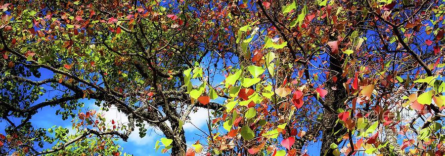 Autumn Photograph - Autumn Leaves 243 L by D Davila