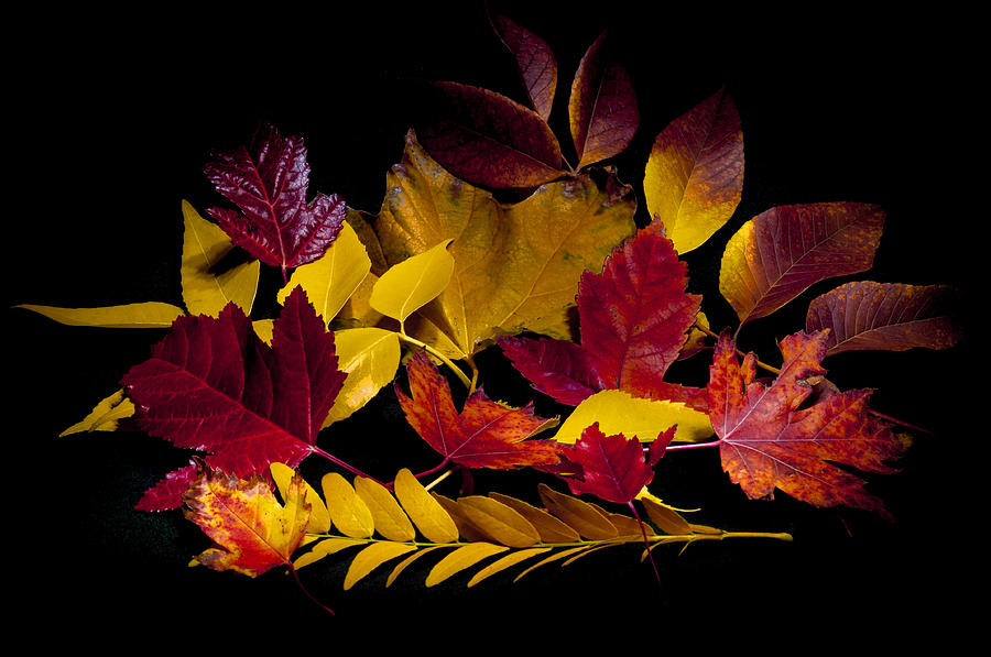 Light Painting Photograph - Autumn Leaves by Barry C Donovan