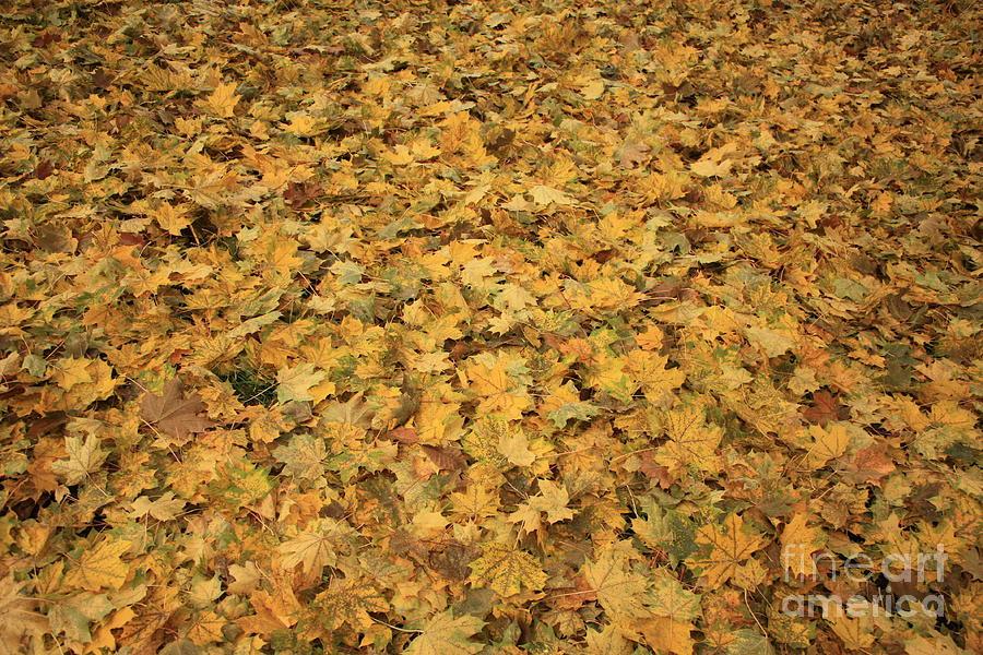 Autumn Photograph - Autumn Leaves Canvas by Carol Groenen