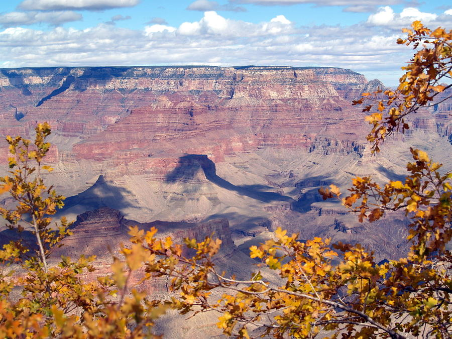 Grand Canyon National Park Photograph - Autumn Leaves by Carrie Putz