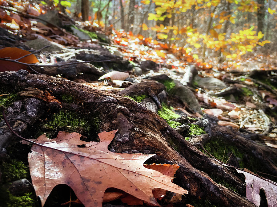 Leaves Photograph - Autumn leaves by Corey OHara