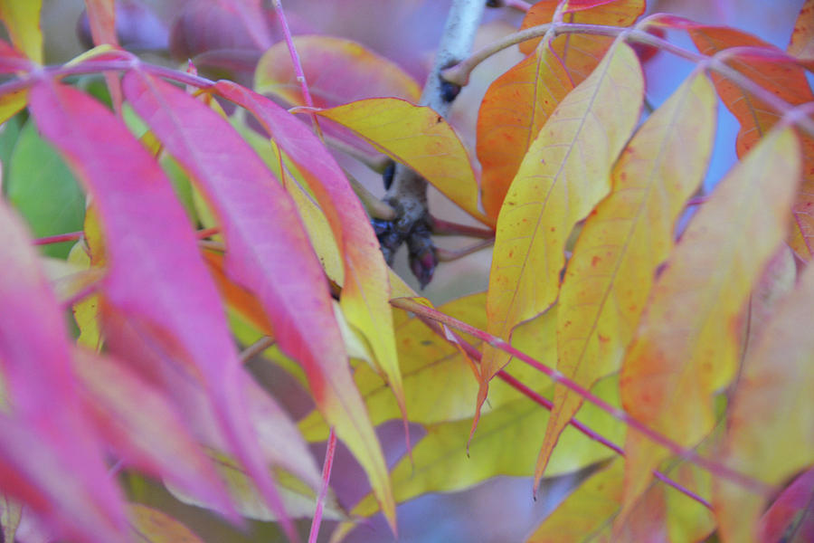 Autumn Photograph - Autumn Leaves by D Patrick Miller