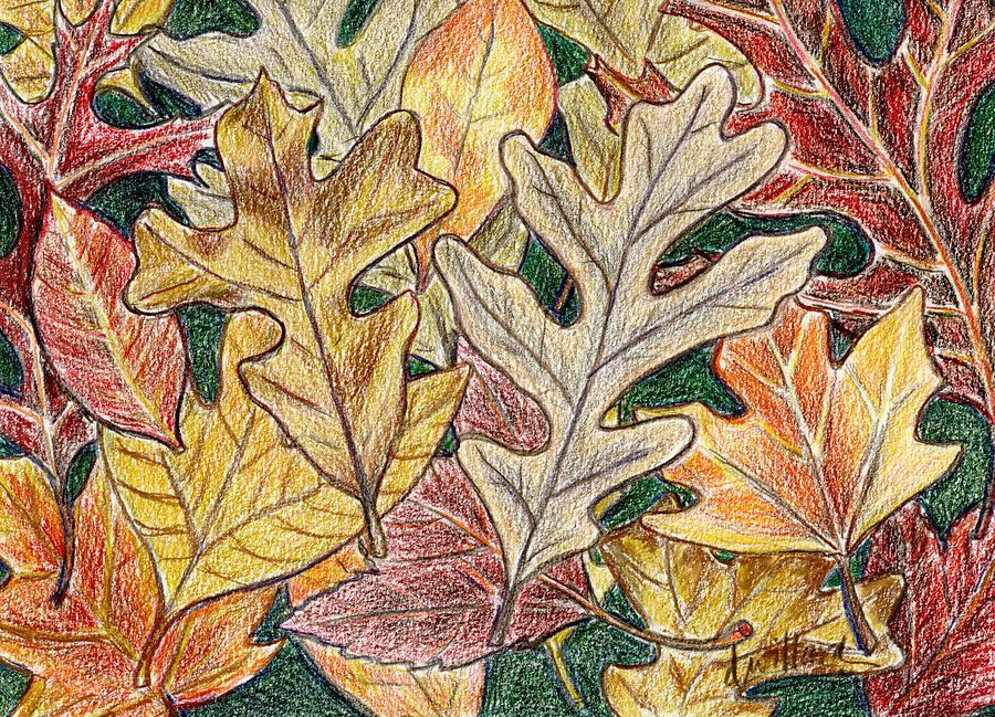 Leaves Drawing - Autumn Leaves by Deborah Willard