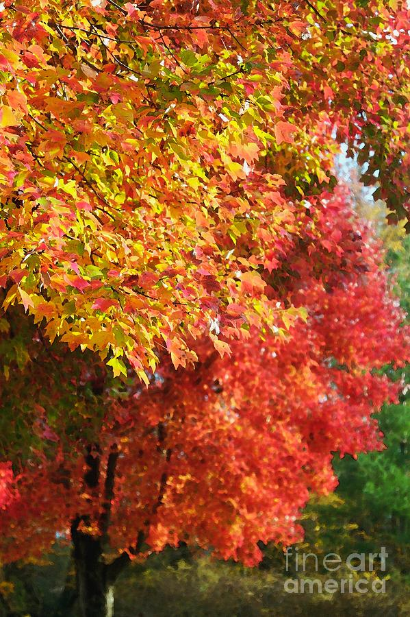 Autumn Photograph - Autumn Leaves by Hideaki Sakurai