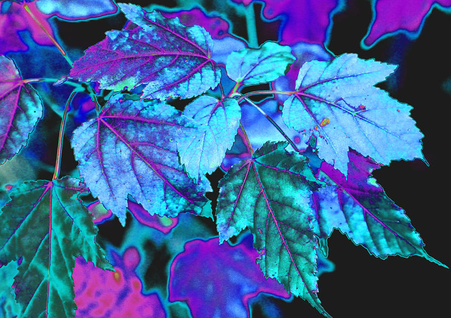 Autumn Leaves In Blue And Pink Photograph By Krista Kulas
