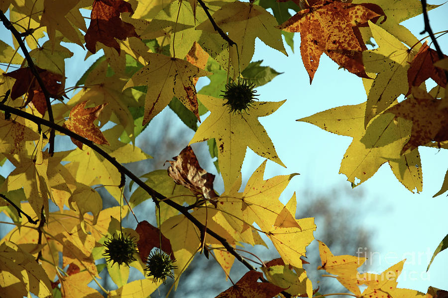 Autumn Leaves by Joanne Coyle