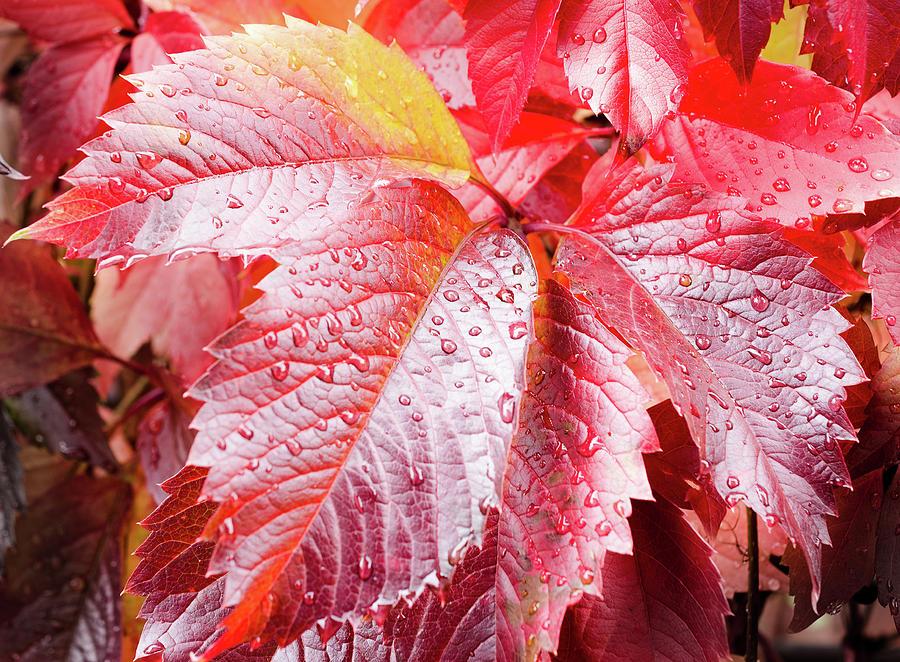 Autumn Photograph - Autumn Leaves by Maurizio Incurvati
