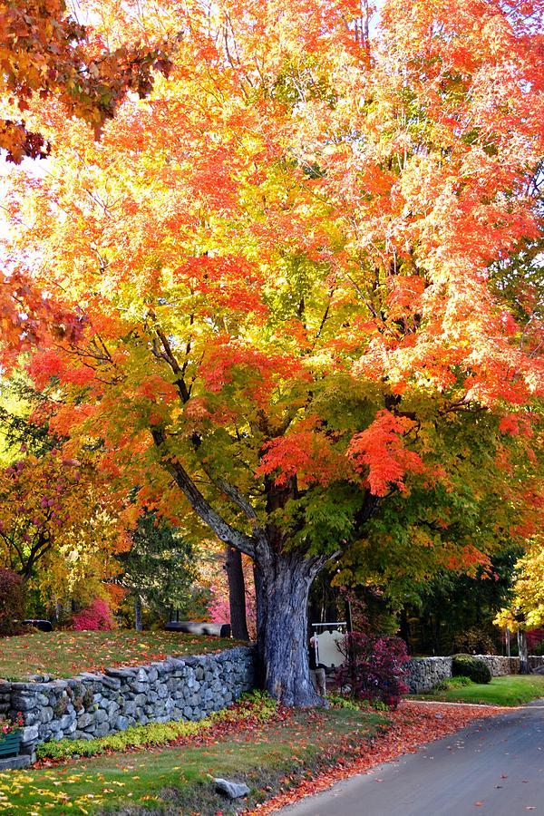 Autumn Leaves by Nina-Rosa Duddy