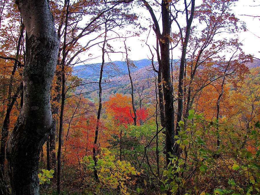 Autumn Leaves Photograph - Autumn Leaves On Blue Ridge Parkway by Lori Miller