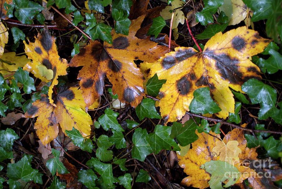 Autumn Photograph - Autumn Leaves On The Ground by Sami Sarkis