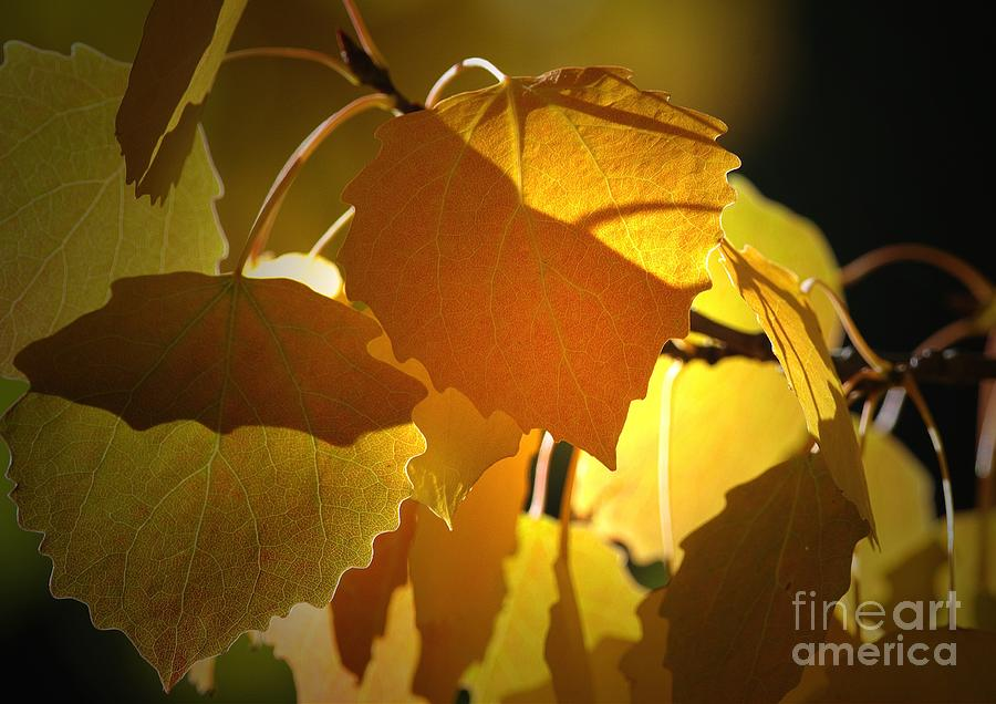 Leaves Photograph - Autumn Leaves by Sharon Talson