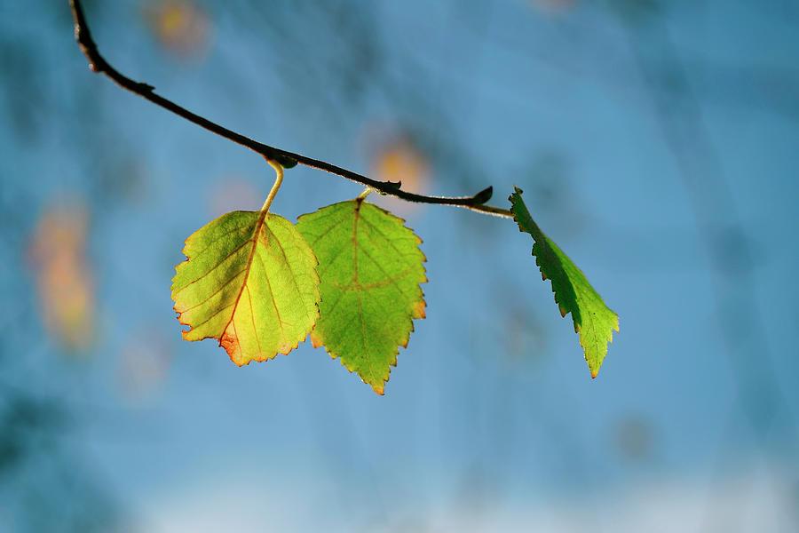 Autumn Photograph - Autumn leaves  by TouTouke A Y