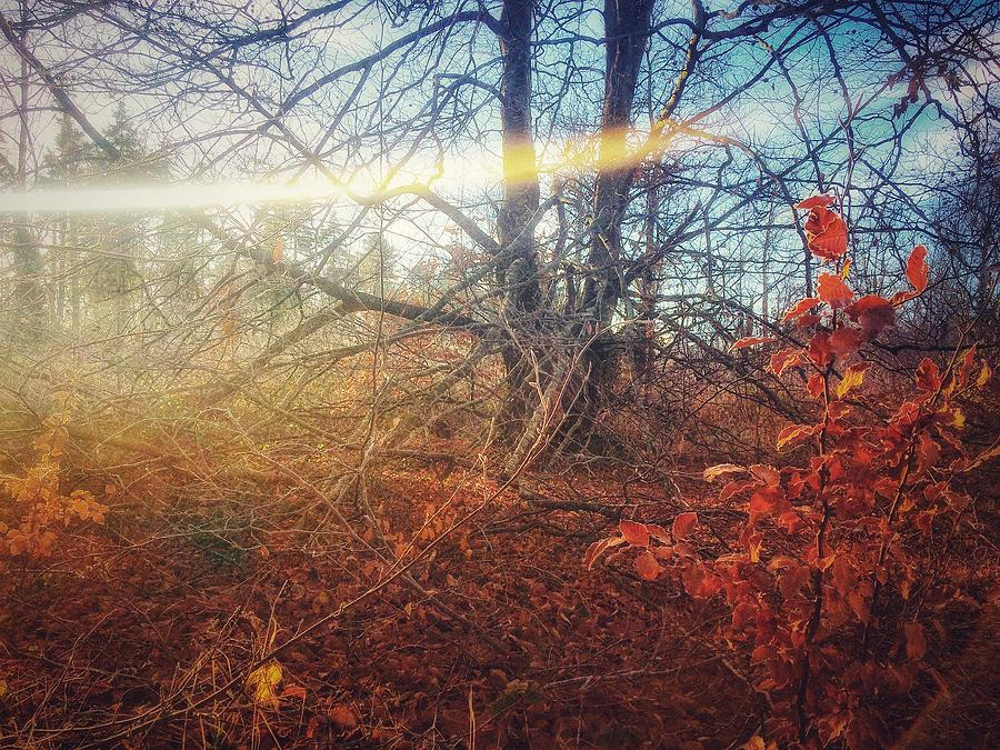 Autumn Photograph - Autumn Light by Andy Walsh