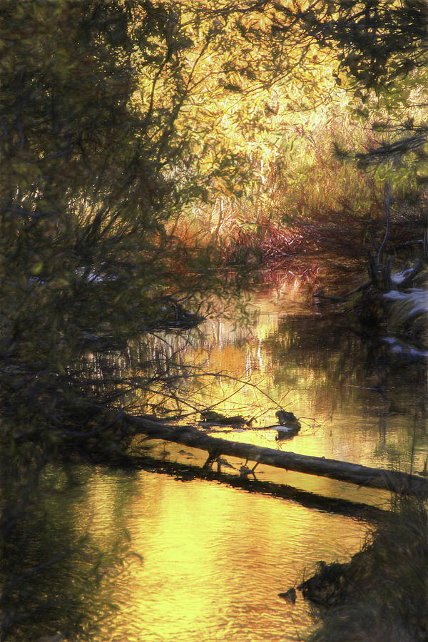 Mcgee Creek Photograph - Autumn Light by Donna Kennedy