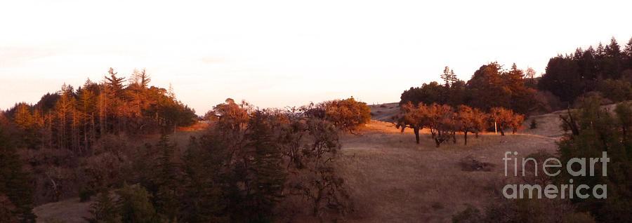 Orange Photograph - Autumn Light by JoAnn SkyWatcher