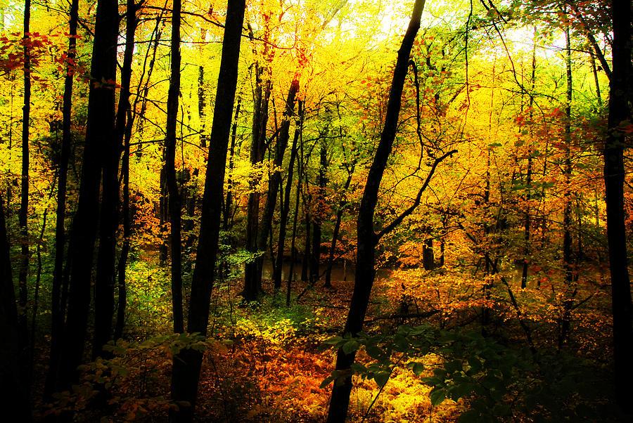 Path Photograph - Autumn Light by William Carroll
