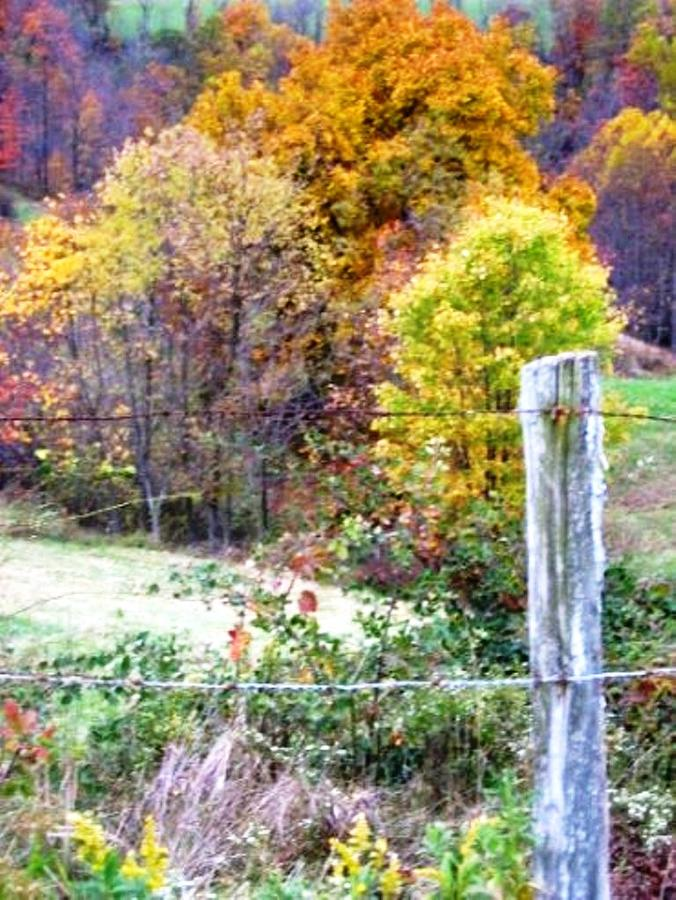 Trees Photograph - Autumn by Linda Henriksen