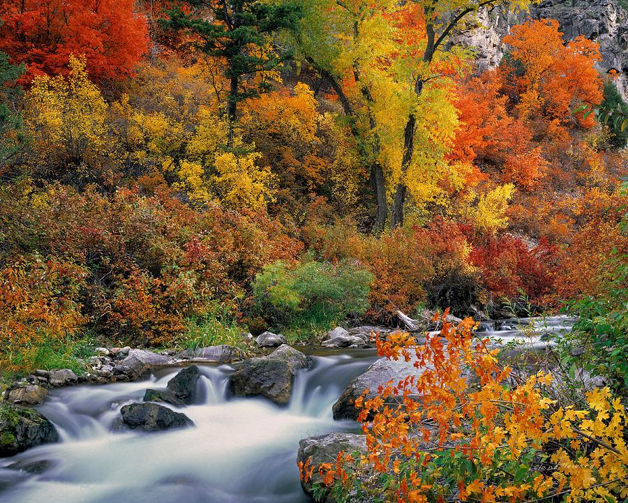 Autumn Photograph - Autumn Magic by Leland D Howard