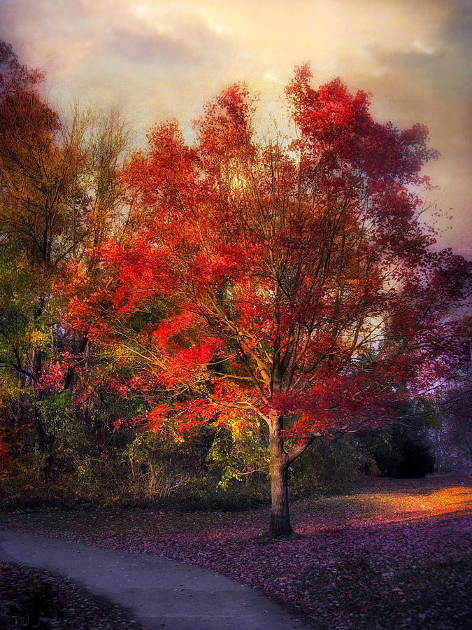 Maple Photograph - Autumn Maple by Jessica Jenney