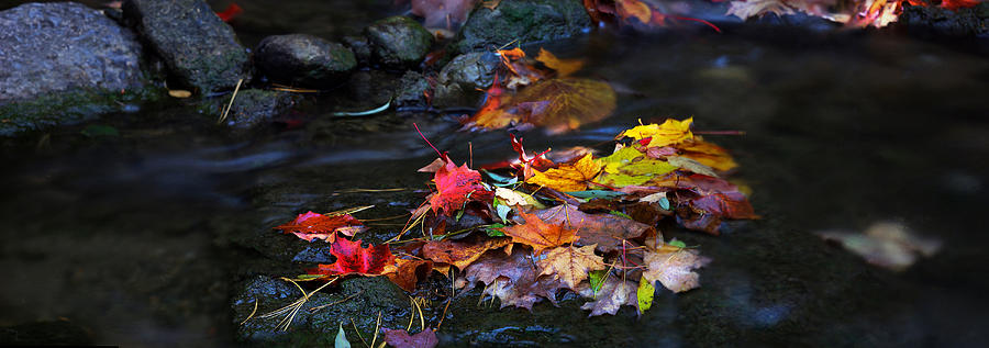 Maple Photograph - Autumn Maple Leaves-0001 by SeanX